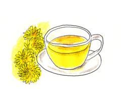 タンポポ茶 効果 効能