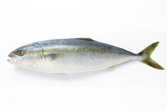 出世魚 名前の変化